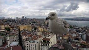 Seemöwe auf dem Hintergrund der Istanbul-Mitte Stockfoto