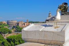Seemöwe auf dem Hintergrund des Forums und des Kolosseums in Rom Lizenzfreie Stockbilder