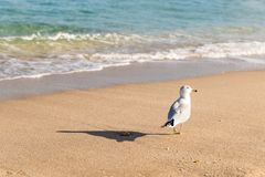 Seemöwe auf dem Miami Beach Lizenzfreie Stockbilder