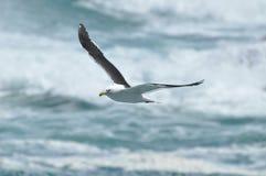 Seemöwe auf dem Ozean Lizenzfreie Stockfotografie