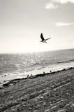 Seemöwe auf dem Strand Stockfoto