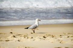 Seemöwe auf dem Strand Stockbilder