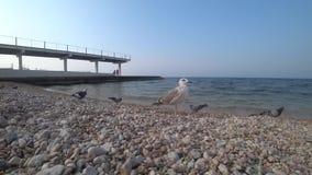Seemöwe auf dem Strand an einem sonnigen Tag stock footage