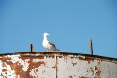 Seemöwe auf dem verfallenden Boot Lizenzfreie Stockbilder