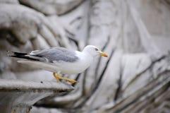 Seemöwe auf der alten Skulptur lizenzfreie stockfotografie