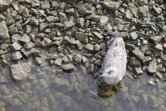 Seemöwe auf der schmutzigen Küste lizenzfreies stockfoto