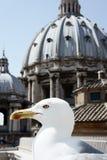 Seemöwe auf einem Dach von Vatican Lizenzfreies Stockbild