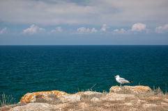Seemöwe auf einem Felsen Stockbild