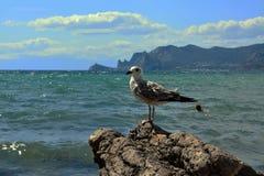 Seemöwe auf einem Felsen Lizenzfreie Stockfotos