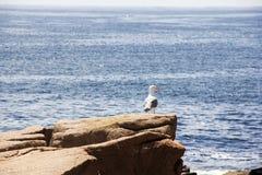 Seemöwe auf einem Felsen Stockfotografie