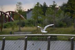 Seemöwe auf einem Zaun Stockfoto