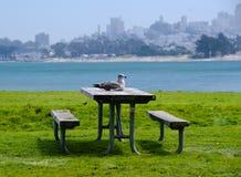 Seemöwe auf einer picnik Tabelle am Strand lizenzfreies stockfoto