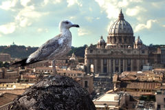 Seemöwe auf Felsen und Kathedrale Lizenzfreie Stockbilder