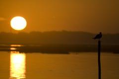 Seemöwe auf Sonnenuntergang stockfotografie