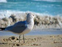 Seemöwe auf Strand Lizenzfreie Stockbilder