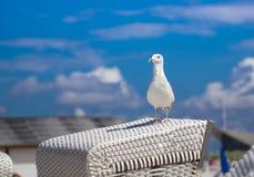Seemöwe auf weißem Strand stockbild