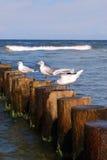 Seemöwe auf Wellenbrecher Lizenzfreies Stockbild