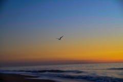 Seemöwe bei dem Strand-Sonnenaufgang, der über Meer fliegt Stockfoto