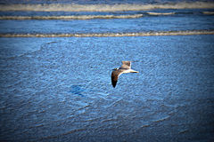 Seemöwe, die über blauem Ozean ansteigt Stockbild