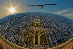 Seemöwe, die über Mars-Feld in Paris, Frankreich fliegt stockfoto