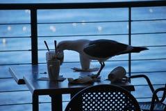 Seemöwe, die übrig gebliebenen Nachtisch genießt Lizenzfreie Stockfotos