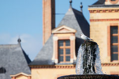 Seemöwe, die auf dem Brunnen sitzt Lizenzfreie Stockfotografie