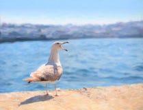 Seemöwe, die auf dem Damm nahe Galata-Brücke, Istanbul sitzt Lizenzfreie Stockfotografie