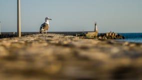 Seemöwe, die auf dem Hafen stillsteht Stockfotos