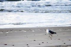 Seemöwe, die auf dem Strand bleibt Stockbild