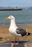 Seemöwe, die auf dem Strand steht Stockfotos