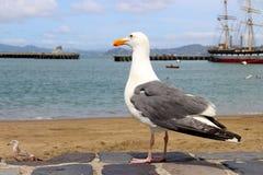 Seemöwe, die auf dem Ufer des Ozeans und des Schiffs steht Stockbilder