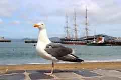 Seemöwe, die auf dem Ufer und den Schiffen steht Stockbilder