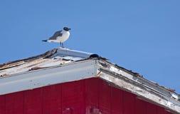 Seemöwe, die auf ein Haus steht Lizenzfreies Stockfoto