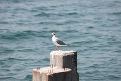 Seemöwe, die auf einem Betonblock im Meer steht Stockfotografie