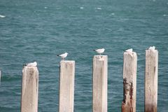 Seemöwe, die auf einem Betonblock im Meer steht Lizenzfreies Stockbild
