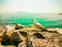 Seemöwe, die auf einem Felsen übersieht das Meer stillsteht Lizenzfreies Stockfoto
