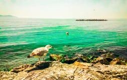 Seemöwe, die auf einem Felsen übersieht das Meer stillsteht Stockfotografie