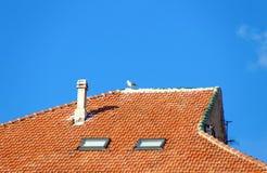 Seemöwe, die auf einem mit Ziegeln gedeckten Dach eines Hauses steht lizenzfreie stockfotos