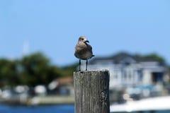 Seemöwe, die auf einem Pier steht stockfotos