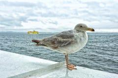 Seemöwe, die auf einem Schiff steht Lizenzfreies Stockfoto