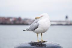 Seemöwe, die auf einem Schiffspoller steht und die Kamera an einem kalten bewölkten Tag im Winter betrachtet Lizenzfreies Stockfoto