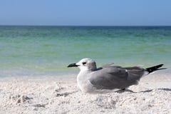 Seemöwe, die auf Florida-Strand durch Ozean stillsteht Lizenzfreie Stockfotos