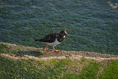 Seemöwe, die in den Seehafen geht lizenzfreie stockfotografie