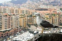 Seemöwe, die einen Luxus von Monaco betrachtet Lizenzfreies Stockbild