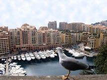 Seemöwe, die entlang der Yachten in Monaco anstarrt Lizenzfreie Stockfotos