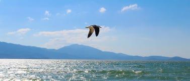 Seemöwe, die friedlich auf den Strand fliegt Lizenzfreie Stockfotografie