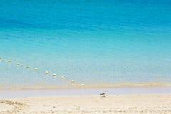 Seemöwe, die im blauen Wasser bleibt Stockbild