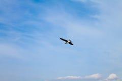 Seemöwe, die im Himmel, über dem Mittelmeer ansteigt lizenzfreie stockbilder