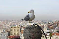 Seemöwe, die Kamera auf Stadthintergrund betrachtet Stockbild