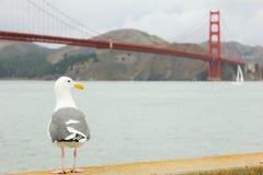 Seemöwe, die mit Golden gate bridge im Hintergrund steht lizenzfreies stockbild